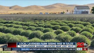 Local lavender farm sees surge in sales