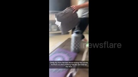 US woman makes bed for dog after kicking him off the furniture