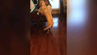 Piano Playing Pup Shows Off His Talent