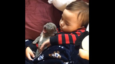 Little Boy Smothered In The Puppy Love | Cuteness overload 😍