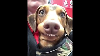 Silly doggy delivers hilariously goofy smile