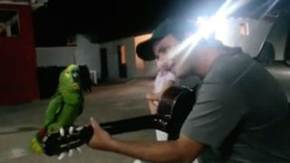 Amazon Parrot Adorably Sings And Whistles Along With Man On Guitar