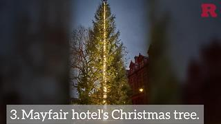 These Christmas trees will instantly put you in the holiday spirit | Rare Life - Video