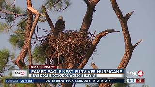 Eagle cam nest survives Hurricane Irma - Video