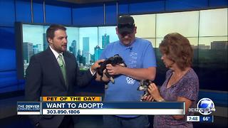 Pet of the day for July 29th - Video
