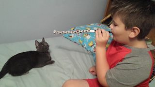 Kitten's Reaction to Party Toy will make You LOL - Video