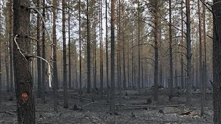 Firefighters Battle Out of Control Forest Fires in Sweden - Video