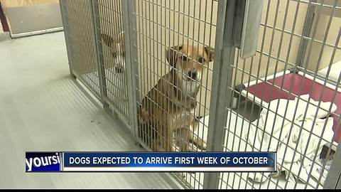 Idahoans can help dogs and cats displaced by Hurricane Harvey