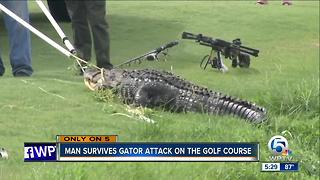 Man survives gator attack on the golf course - Video