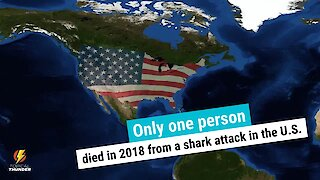 Shocking shark attack facts!