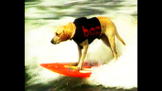 Daredevil Dogs - Video