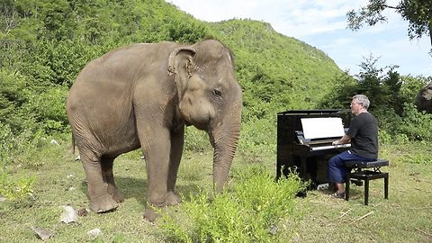 Classical Pianist Plays Bach To Blind Elephant