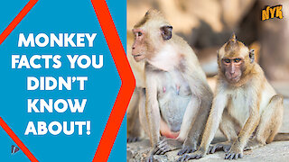 Top 4 Awesome Facts About Monkeys