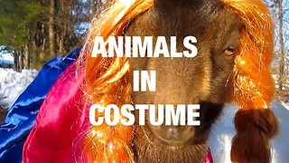 Animals Wearing Fun Costumes - Video