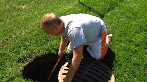 The Man Who Rescued Ducklings From A Sewer Is A Real-Life Hero