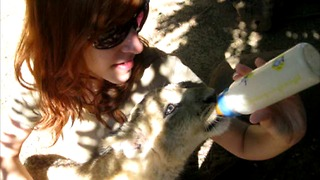 Bottle-feeding a rescued lion cub