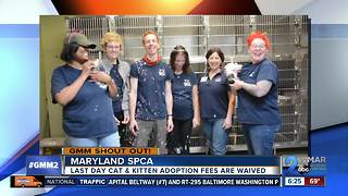 Good morning from the Maryland SPCA, Freckles and Cabbage! - Video