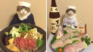 Cat-su curry! Adorable kitty munches on tasty Japanese food