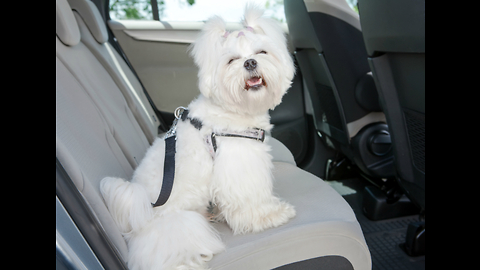 List Of Top Three Dog-Friendly Cars That Canines Adore
