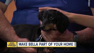 Nov. 19 Rescues in Action: Bella needs a forever home - Video