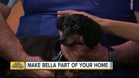 Nov. 19 Rescues in Action: Bella needs a forever home