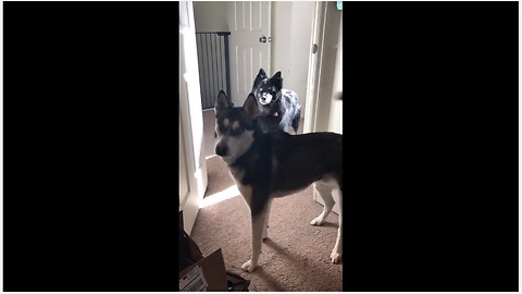 Dogs lose it when they hear the magic word