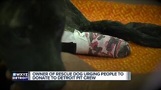 Owner of rescue dog urging people to donate to Detroit Pit Crew