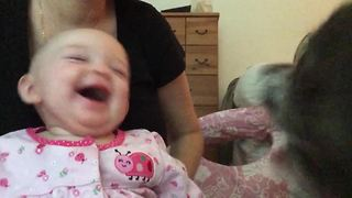 """Baby Girl Laughing at Dog Barking"""