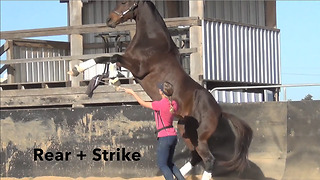 Smart horse displays array of tricks - Video