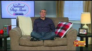 Chatting with Andy Cohen About the National Dog Show - Video