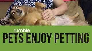 Compilation of pets getting pet is the cutest thing you'll see today! - Video