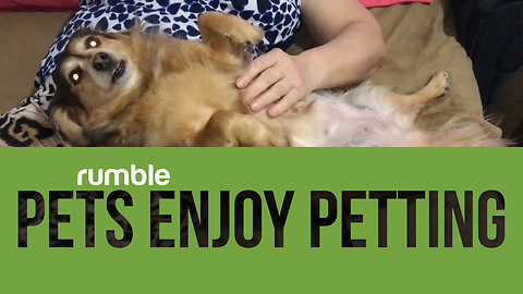 Compilation of pets getting pet is the cutest thing you'll see today!