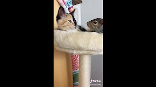 Kitten and squirrel meet for the first time, instantly become friends
