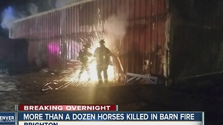 16 horses killed in barn fire on Powhaton Road in Brighton - Video