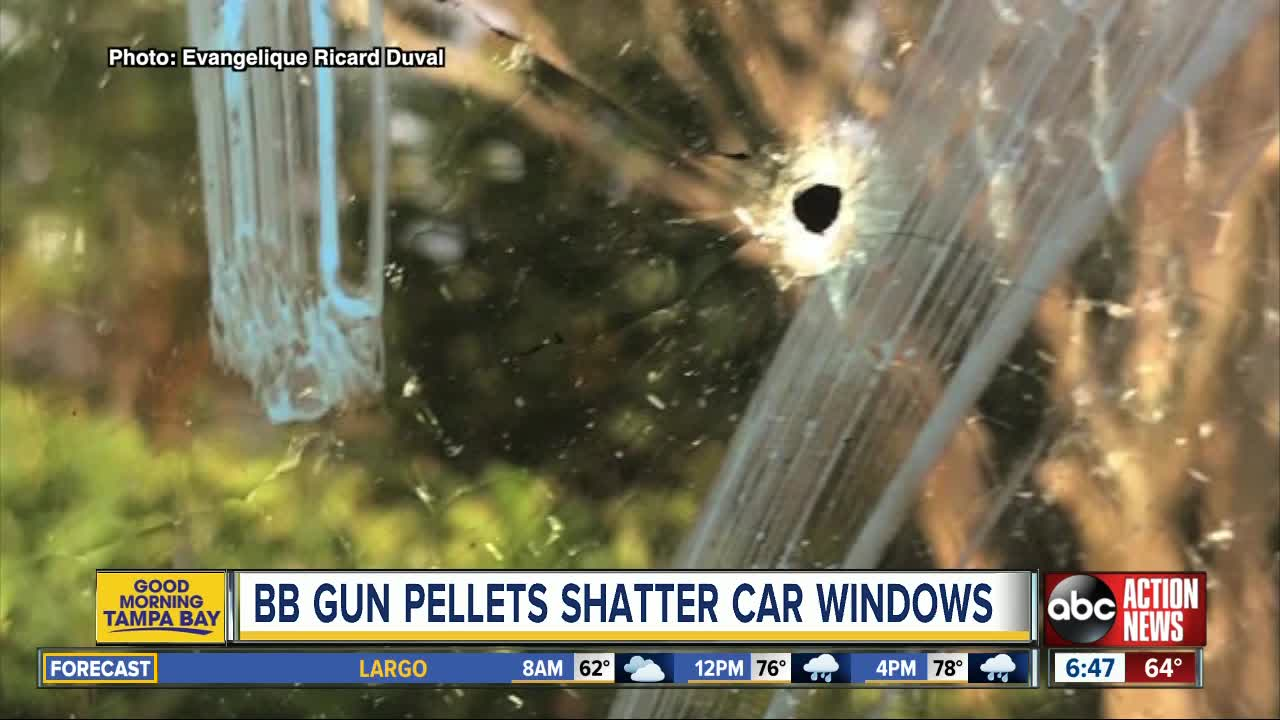Several Palm Harbor neighbors claim car windows were shattered by BB gun