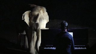 Rescue elephants enjoy pianist playing Christmas carols