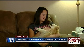 Missing Oklahoma dog found in Colorado