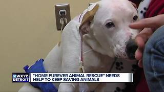 Detroit's Home Fur-ever animal rescue needs your help to stay open - Video