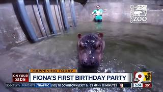It's Fiona the hippo's first birthday! - Video