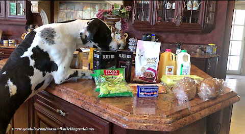 Great Danes Have Fun With Cat Food Delivered By Instacart