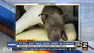 Pit Bull shot twice, found under I-95 overpass - Video