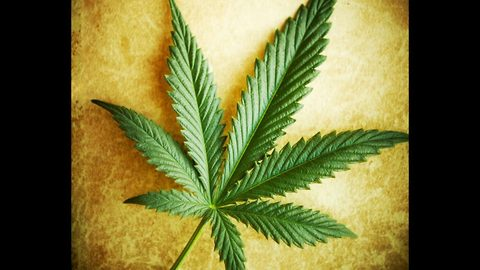 10 Common Myths About Marijuana