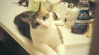 Cute kitty gives priceless look to the camera