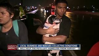 Florida pet rescue groups collecting donations - Video