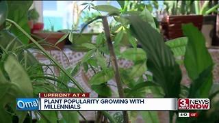 Plants a growing trend among Omaha millennials - Video