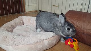 Bunny Doesn't Like To Be Pestered By Toys In Its Soft Bed
