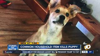 Common household item kills puppy - Video