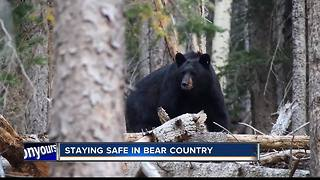 Staying safe in bear country - Video