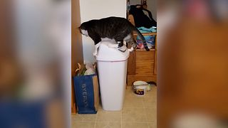 Hilarious Cat Falls Into The Trash - Video