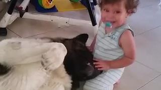 This Affectionate Akita Shares Precious Hugs With Baby - Video